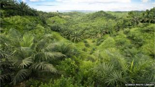 A palm oil plantation in Malaysia