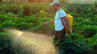 Homens fumigando plantação