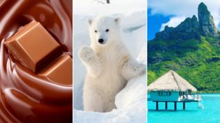 Chocolate, a polar bear and a South Pacific island