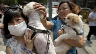 Animal rights advocates carry dogs as they walk outside of the Yulin government office in Beijing (10 June 2016)