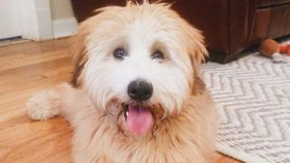 Winnie the dog