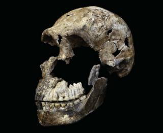 Остатки черепа взрослого мужчины H. naledi