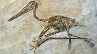 Птерозаври