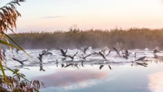 Broads Ulusal Parkı'nda sisli ve soğuk bir sabah