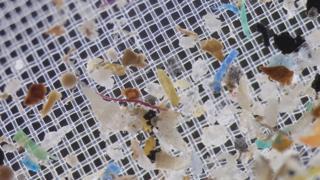 Imagem mostra microplásticos