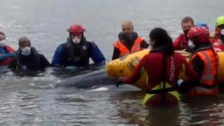 , Minke whale on Hartlepool coast saved from being stranded