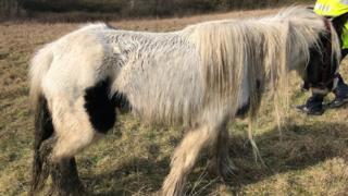 Horse abandoned in Kirkby-in-Ashfield