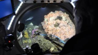 Coral de água fria visto de dentro de um submarino