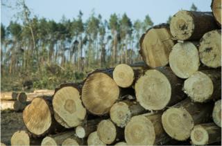 木质建筑会有助于人类回收大气中的碳排放,然后将碳储存于我们的住家和办公楼