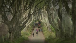 Tourists at the Dark Hedges