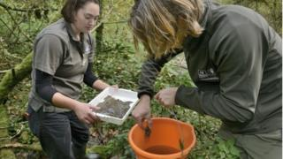 GWT collecting crayfish