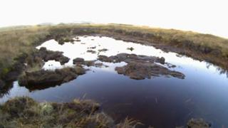 Cors Fochno peat bog near Borth, Ceredigion