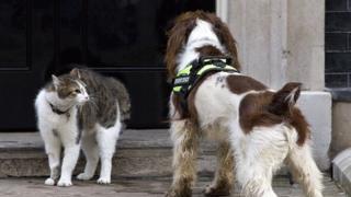 Кіт Ларрі та собака