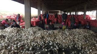 دولت ترکیه احتکار کنندگان پیاز را مقصر بالا رفتن قیمت پیاز در مغازهها میداند