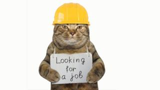 Cat holding up a sign looking for a job