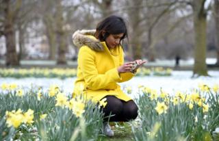 A woman in a yellow coat uses her phone to take a photo of daffodils in a snow-covered park