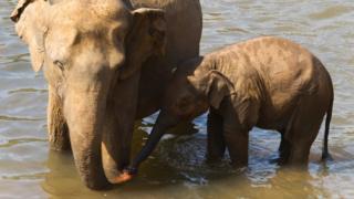 فيل ودغفل يقفان في المياه
