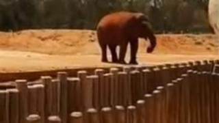 Elephant in enclosure