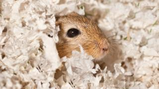 """The gerbil was """"thankfully still alive but very hungry"""""""