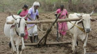 खेती करता किसान