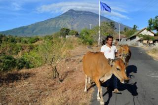 A farmer moves cattle from his land in the Kubu subdistrict of Karangasem Regency on the Indonesian resort island of Bali on 26 September 2017, as Mount Agung volcano looms in the background.