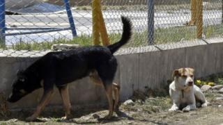La campagne durera 3 mois avec pour cibles les animaux de compagnie (photo - archives)
