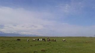 Кыргызстанда 10 миллион гектар жайыт бар.