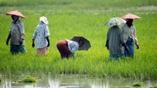 İklim değişikliği bazı bölgelerdeki çiftçileri diğerlerine göre daha çok etkileyecek
