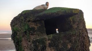 Seal atop a pillbox