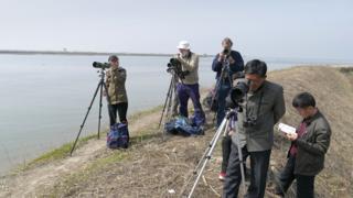 Looking for shorebirds at wetland in Mundok, North Korea