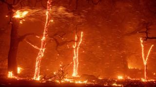 Árboles envueltos en llamas en California cerca de la localidad de Paradise en novimebre de 2018