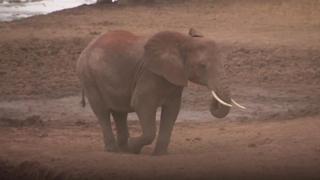 An elephant in Kenya