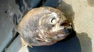 Fish found in Doncaster lake
