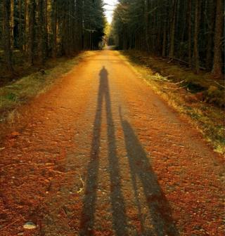 Shadow of a dog and its owner on a path lined with trees