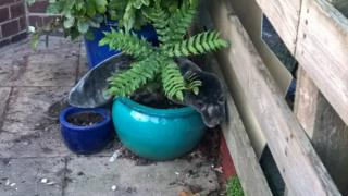 The seal splayed across a plant pot