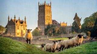 Овцы в Глостершире