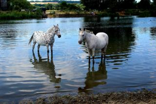 Horses in the water at Oxford's Port Meadow