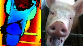 3D image of pig