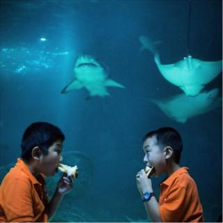 Two boys eat next to a gigantic fish tank, containing sharks and rays