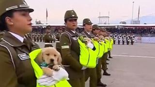 щенки на военном параде