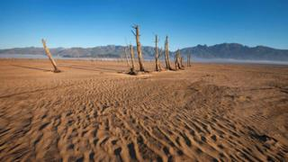 dried out tree trunks on sand