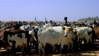 Fulani semi-nomadic herder's in Diafarabe, Mali