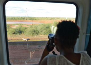Woman takes a photo of a zebra from the train
