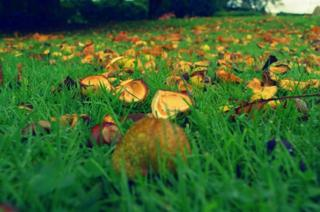 Conkers in Pittencrieff Park