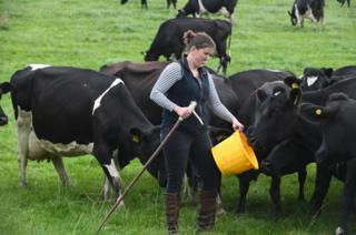 Liz Haines feeds her cows