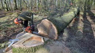 جنگلهایی که هر دقیقه به اندازه ۳۰ زمین فوتبال، کوچک میشوند