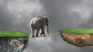 Elefante en una cuerda
