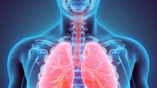 Representação artística dos órgãos internos do corpo humano