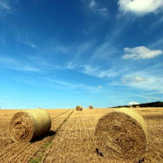 Gathered hay at Quintrell Downs, close to Newquay in Cornwall