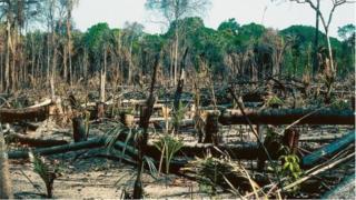 Les forêts dites primaires ou vierges sont les plus touchées par la déforestation en 2018.